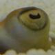 Snake Slavik