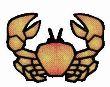 Фотография Crab
