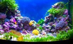 Будующий  морской травник