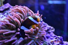 НовоАлтайский риф