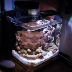 Общий вид рифа