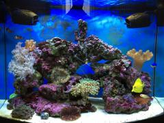 AquaEL reef max 8 месяцев.