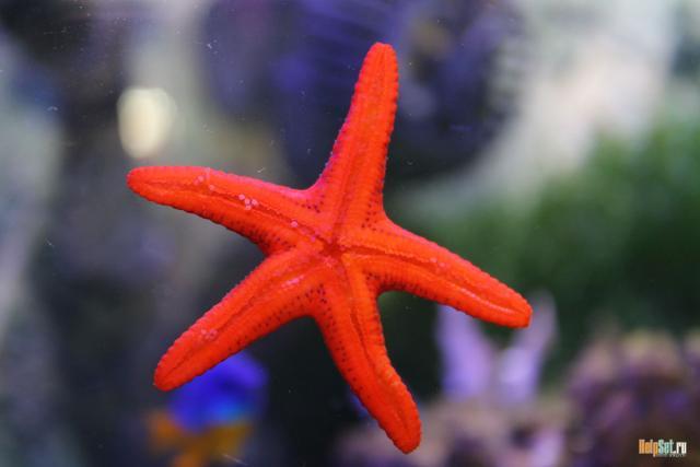 Мой морской аквариум на 34 литра