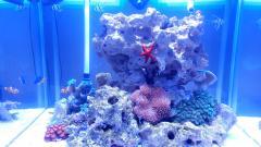 Видео - новый аквариум 140 литров