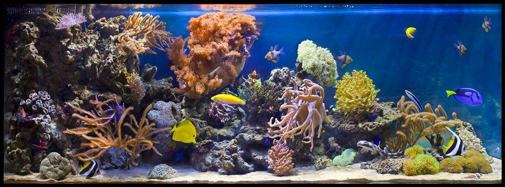 Aqualogo_rif_s.jpg