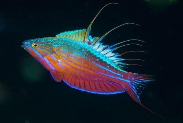 660b42c4faec90dbd582a58f6d1891b5--saltwater-tank-saltwater-aquarium.jpg