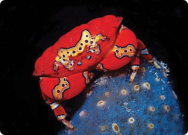 crab-trip-budget.jpg