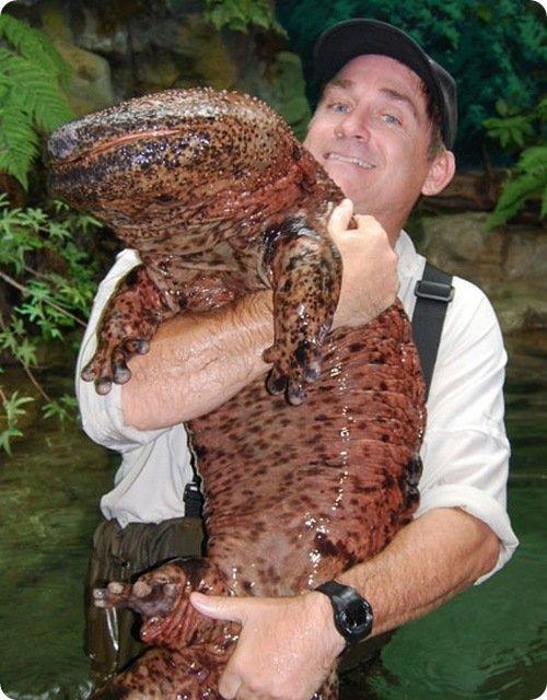 salamande10.jpg