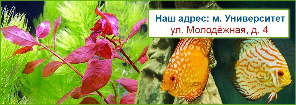 Supermarket-Aqualogo-Yniversitet-Mi-otkrilis.jpg