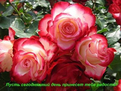 post-11844-1300128346_thumb.jpg