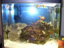 Nemo_May2004_.jpg