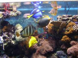 fishes_2.jpg