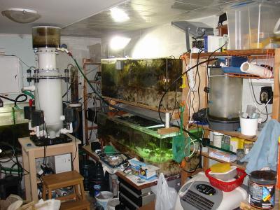 Fish_room.JPG