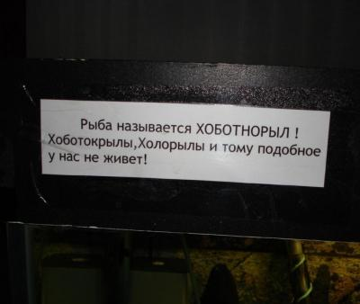 hobotnoril.jpg