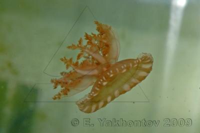 Cassiopeia1.jpg