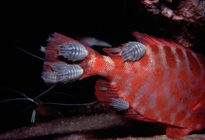 Isopod9.jpg