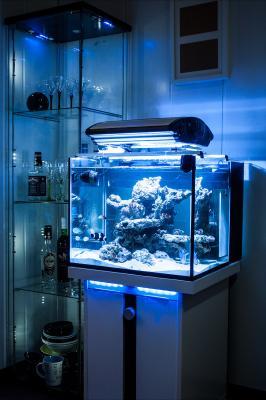 Аквариум дизайн на 60 литров