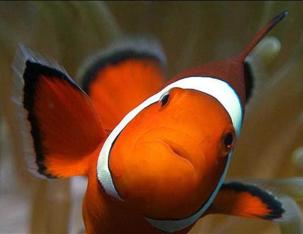 Фотография fish-man