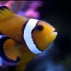 ЛЕД светильник для 500 литрового аквариума - последнее сообщение от Морской Клоун