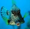 Aquael Nano Reef Казань 30 литров - последнее сообщение от romakva