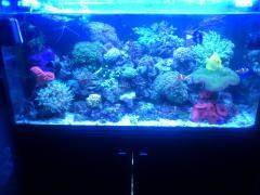 Морской аквариум 160л Еланы