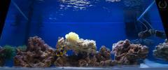 Пейзаж моего аквариума