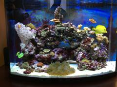 AquaEL reef max 12 месяцев.