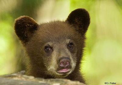 bears_20.jpg