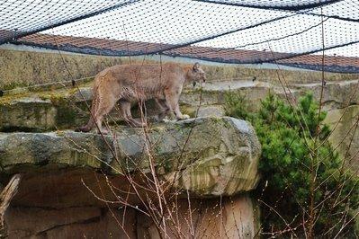 Zoopark-u-morya-v-Bremerkha (4).jpg
