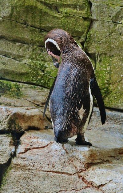 Zoopark-u-morya-v-Bremerkha (8).jpg