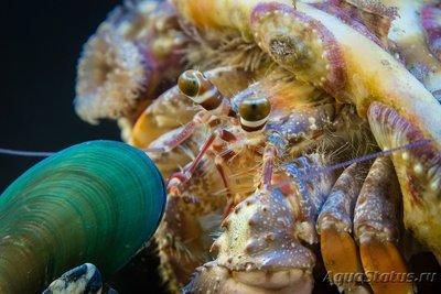 crab_23.jpg