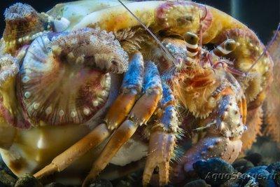 crab_26.jpg