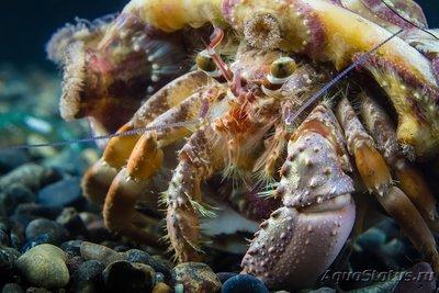 crab_31.jpg