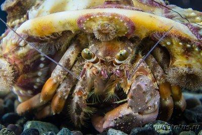 crab_37.jpg