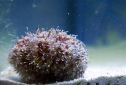 Urchin1.jpg