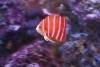 marineaquarium